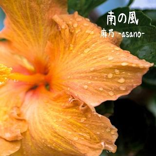 麻乃「南の風」